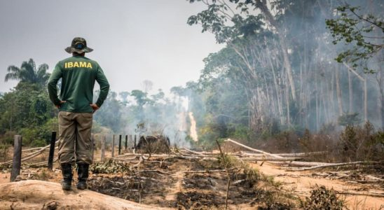 Floresta-Nacional-do-Jamanxim-Pará-Foto_-Vinícius-Mendonça-Ibama