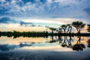Meu Quintal é a Amazônia